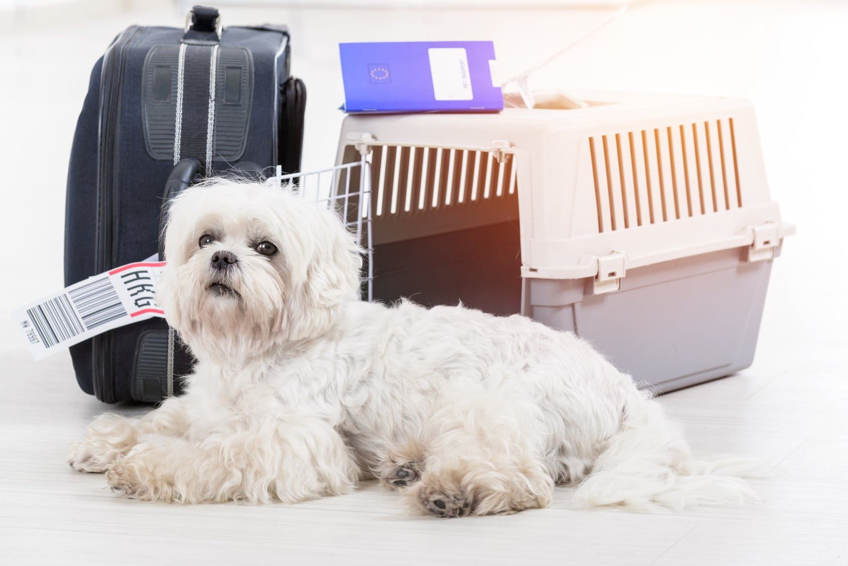 Pet Travel – Moving to Malta With Your Pet