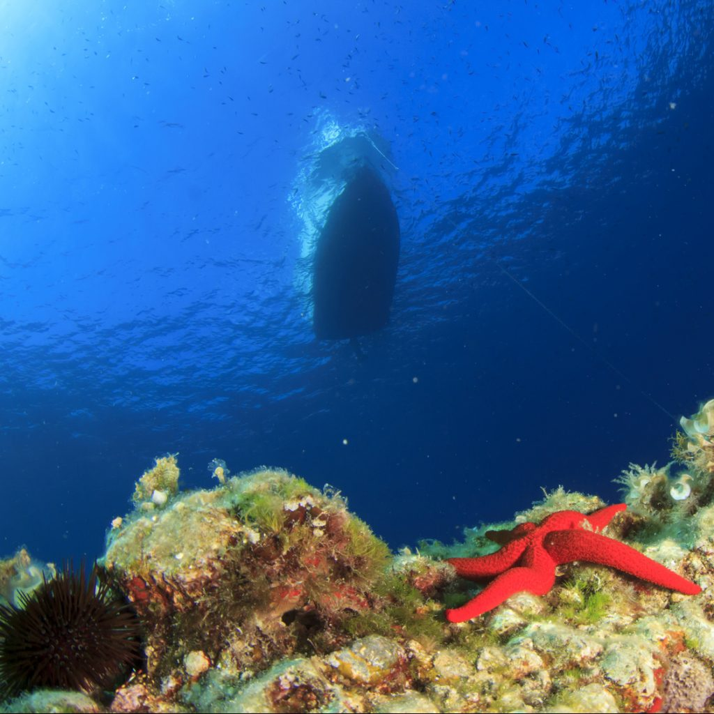 Anchor Reef